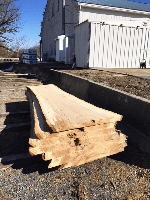 Live Edge Hickory Slabs for Sale at Bailey Wood Products